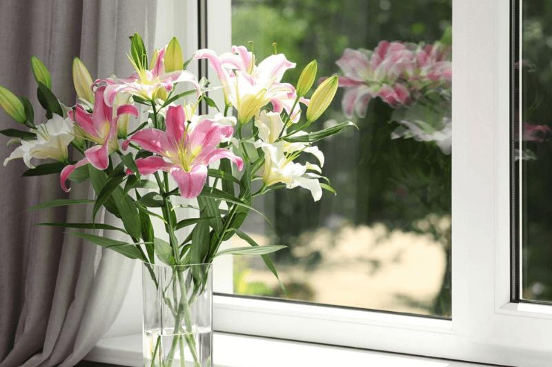 Budvar_fenêtres